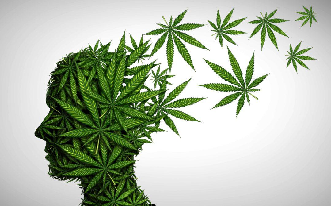 Untuk Apa Legalisasi Ganja?